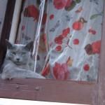 Affacciati alla finestra amore mio