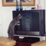 Cos'è che danno in tv stasera?