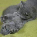 Cuccioli a 5 mesi
