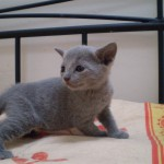 Zarina, 4 settimane